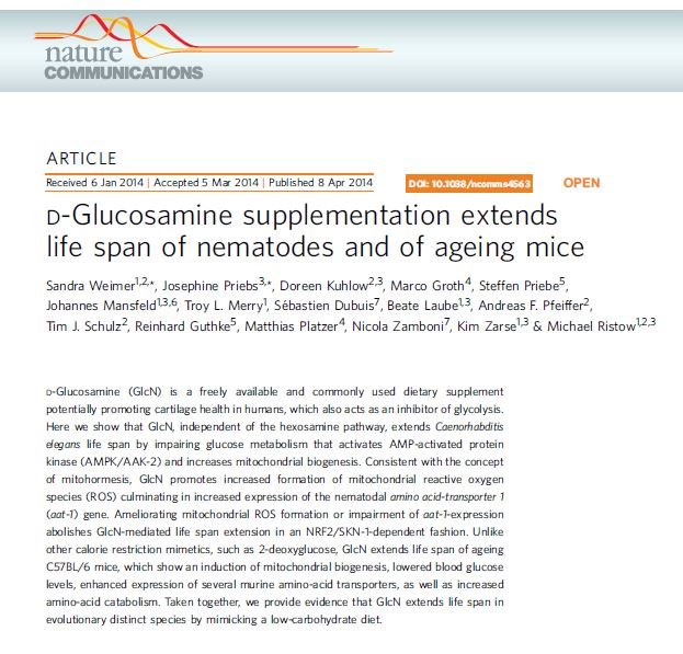 Glucosamine could extend life span